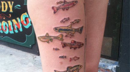 Minnow fish tattoos covering shark bites