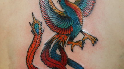 Back phoenix tattoo in blue orange and red with long tail feathers